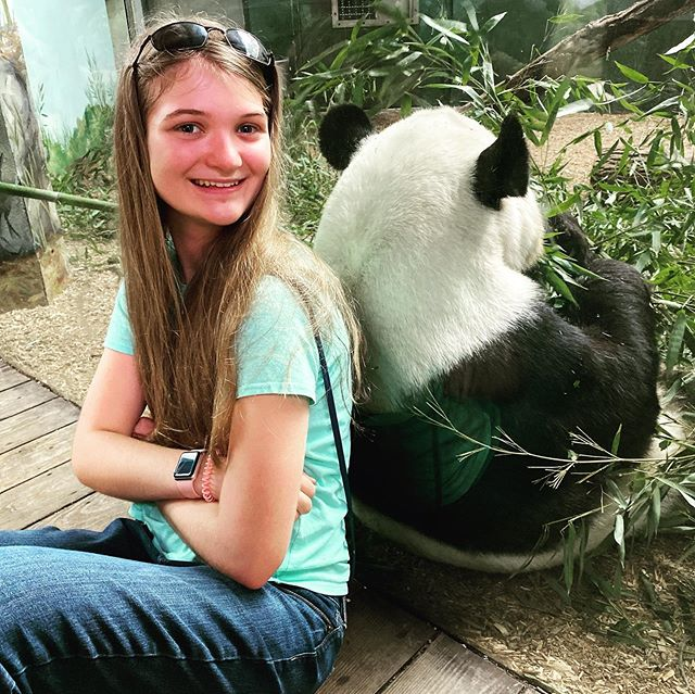 Back-to-back. #zooatlanta #pandas #family #travel